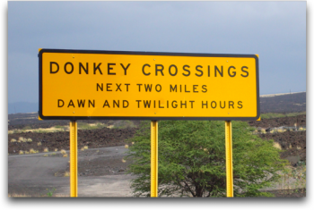 Donkey Crossing Sign – a must need for any office